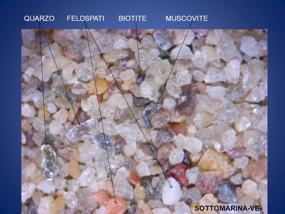 Si tratta di particolari strutture microscopiche costituite da carbonato di calcio che fungono da sostegno del corpo molle delle spugne.