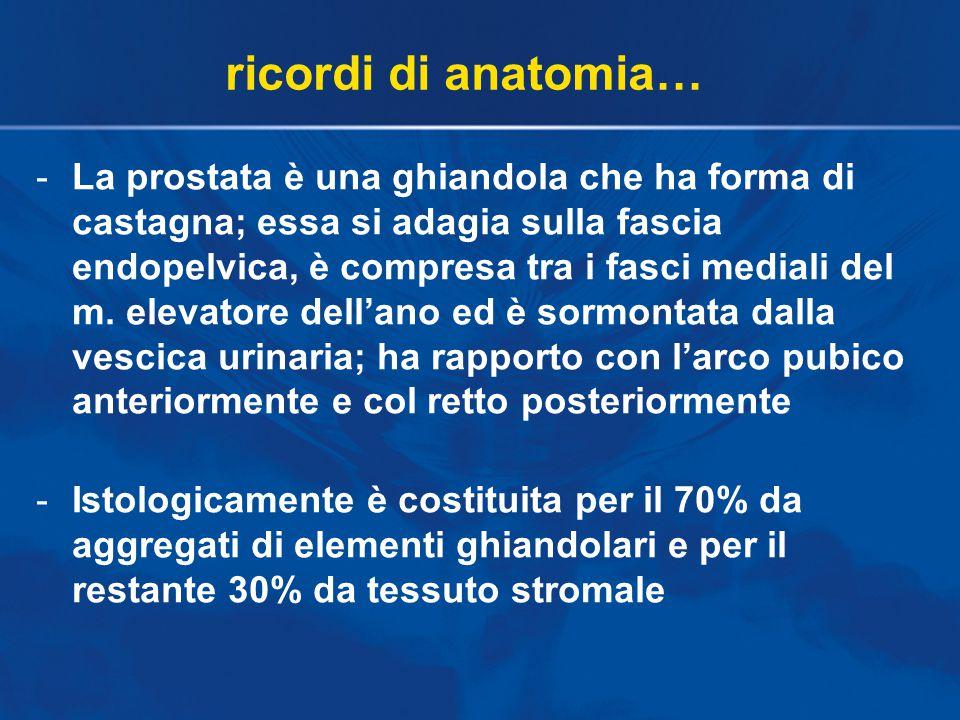 -La prostata è una ghiandola che ha forma di castagna; essa si adagia sulla fascia endopelvica, è compresa tra i fasci mediali del m. elevatore dell'a