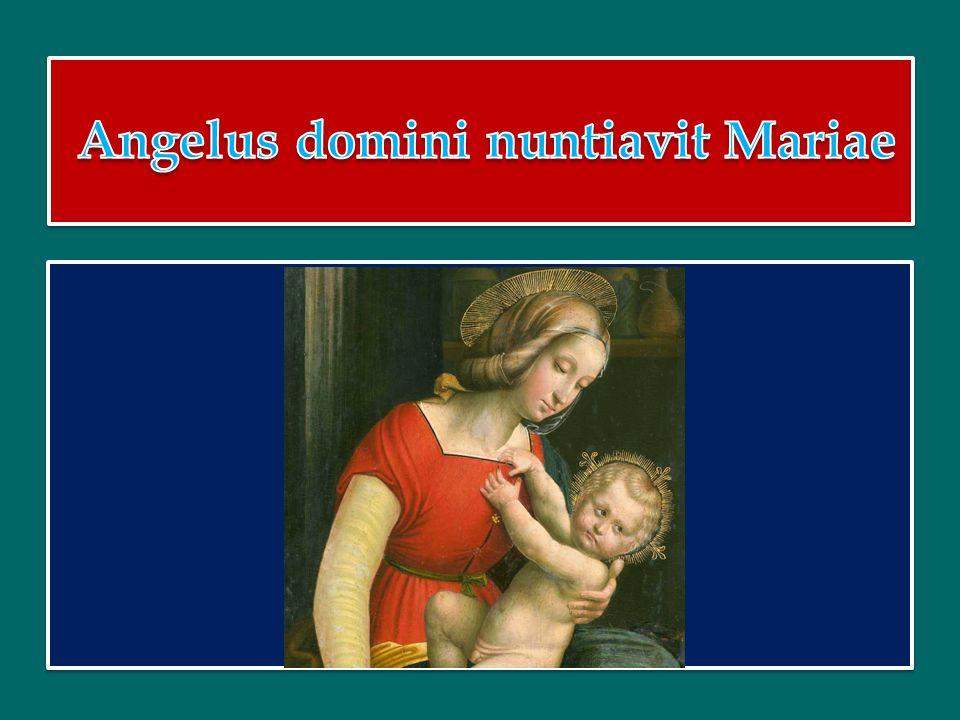 Le brevi similitudini proposte dall'odierna liturgia sono la conclusione del capitolo del Vangelo di Matteo dedicato alle parabole del Regno di Dio ( 13,44-52).