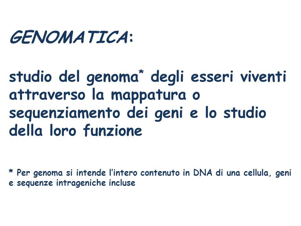 GENOMATICA: studio del genoma * degli esseri viventi attraverso la mappatura o sequenziamento dei geni e lo studio della loro funzione * Per genoma si intende l'intero contenuto in DNA di una cellula, geni e sequenze intrageniche incluse