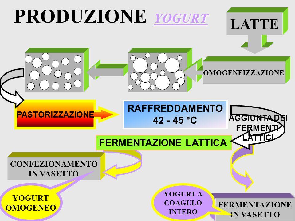 FERMENTAZIONE LATTICA YOGURT BATTERI ACIDO LATTICO LATTOSIO Streptococcus Thermophilus Lactobacillus Bulgaricus ACIDIFICAZIONE DEL LATTE FERMENTI LATT