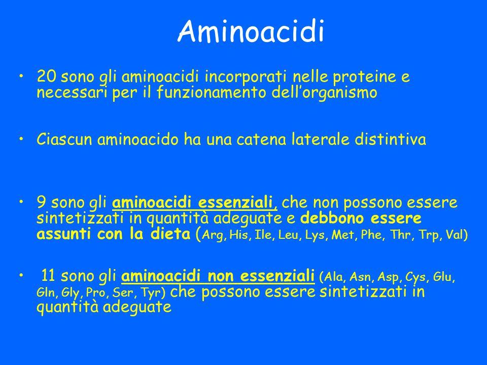 Aminoacidi 20 sono gli aminoacidi incorporati nelle proteine e necessari per il funzionamento dell'organismo Ciascun aminoacido ha una catena laterale