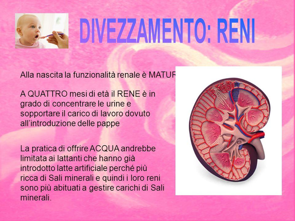 A QUATTRO mesi di età il RENE è in grado di concentrare le urine e sopportare il carico di lavoro dovuto all'introduzione delle pappe La pratica di of