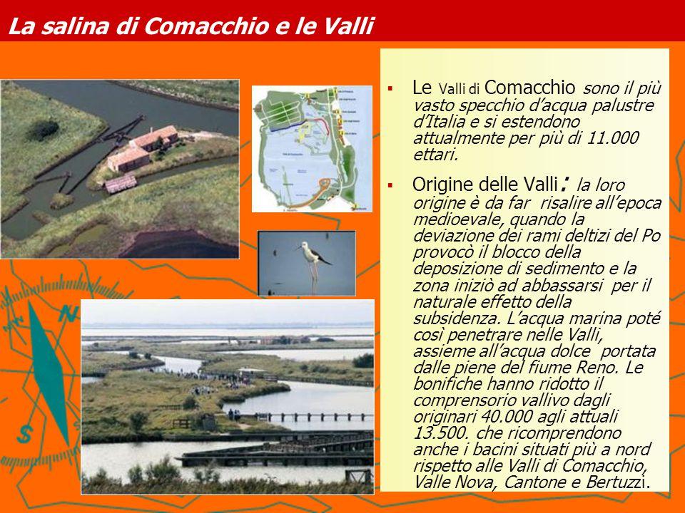 Le valli di Comacchio, formate da acqua salmastra dalla salinità molto accentuata, rappresentano un importante biotopo di zona umida ad acqua salmastra, costituito da vegetazione alofila dichiarato di interesse internazionale, in base alla convenzione di Ramsar del 1971.