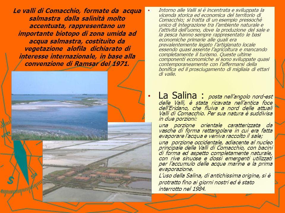 Da allora le caratteristiche della Salina sono lentamente mutate Dal 2001, la Salina è stata interessata dalla realizzazione di un Progetto LIFE Natura che aveva come scopo la conservazione e il ripristino degli habitat tipici della salina.