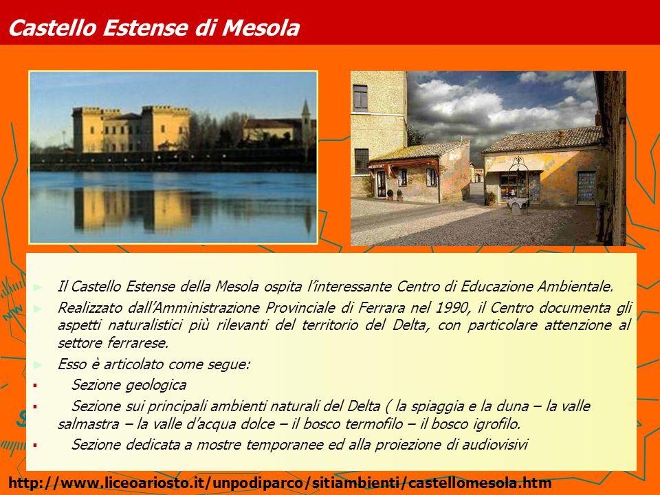 Le Paleodune di Massenzatica Su proposta di Nereo Alfieri, nel 1970, viene promulgata una legge di tutela delle dune di Messenzatica, tratto residuo del fascio litoraneo etrusco, già allora ampiamente saccheggiato.
