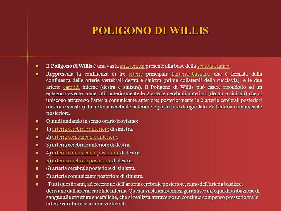 POLIGONO DI WILLIS Il Poligono di Willis è una vasta anastomosi presente alla base della scatola cranica. Il Poligono di Willis è una vasta anastomosi