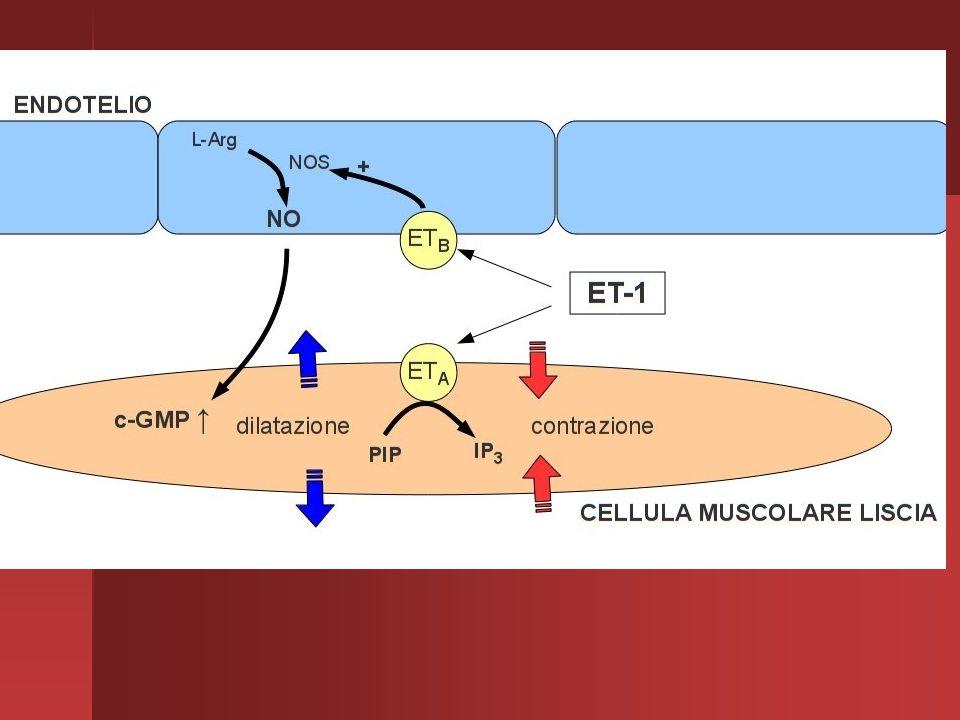ENDOTELINE Le endoteline (ET) sono una famiglia di polipeptidi ad azione vasocostrittrice e ipertensiva. Vengono prodotti dall'endotelio vascolare (da