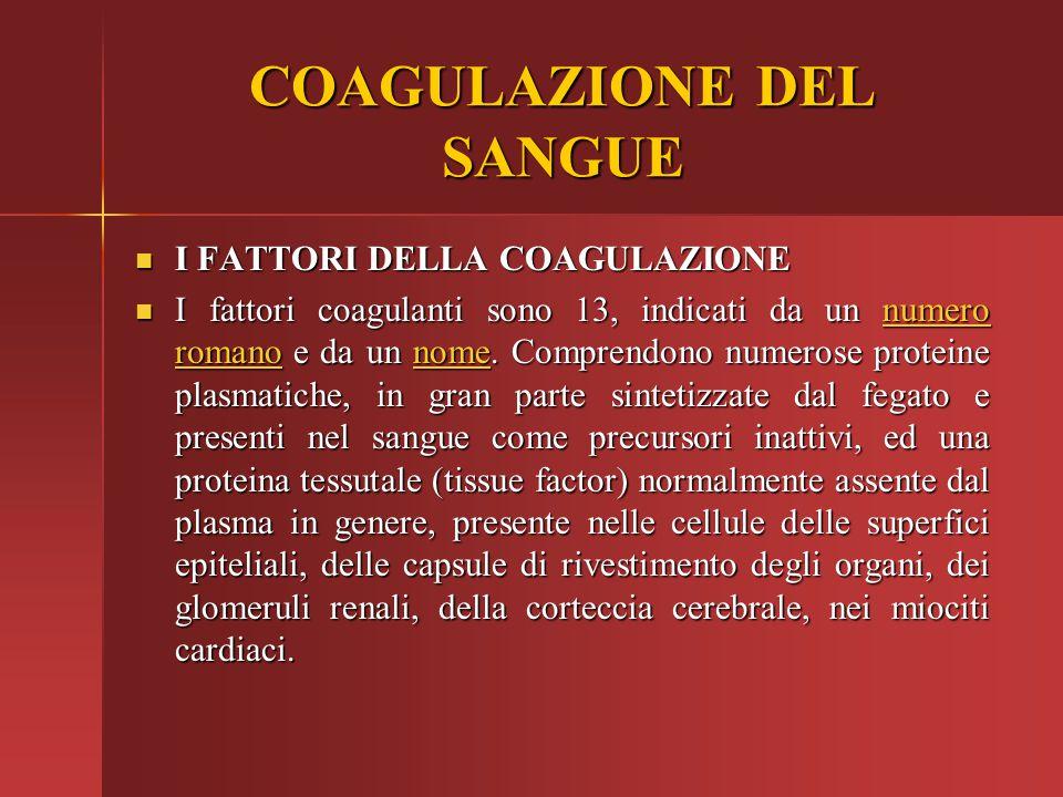 COAGULAZIONE DEL SANGUE I FATTORI DELLA COAGULAZIONE I FATTORI DELLA COAGULAZIONE I fattori coagulanti sono 13, indicati da un numero romano e da un n