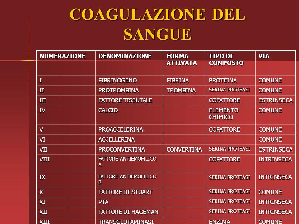 COAGULAZIONE DEL SANGUE NUMERAZIONEDENOMINAZIONE FORMA ATTIVATA TIPO DI COMPOSTO VIA IFIBRINOGENOFIBRINAPROTEINACOMUNE IIPROTROMBINATROMBINA SERINA PR