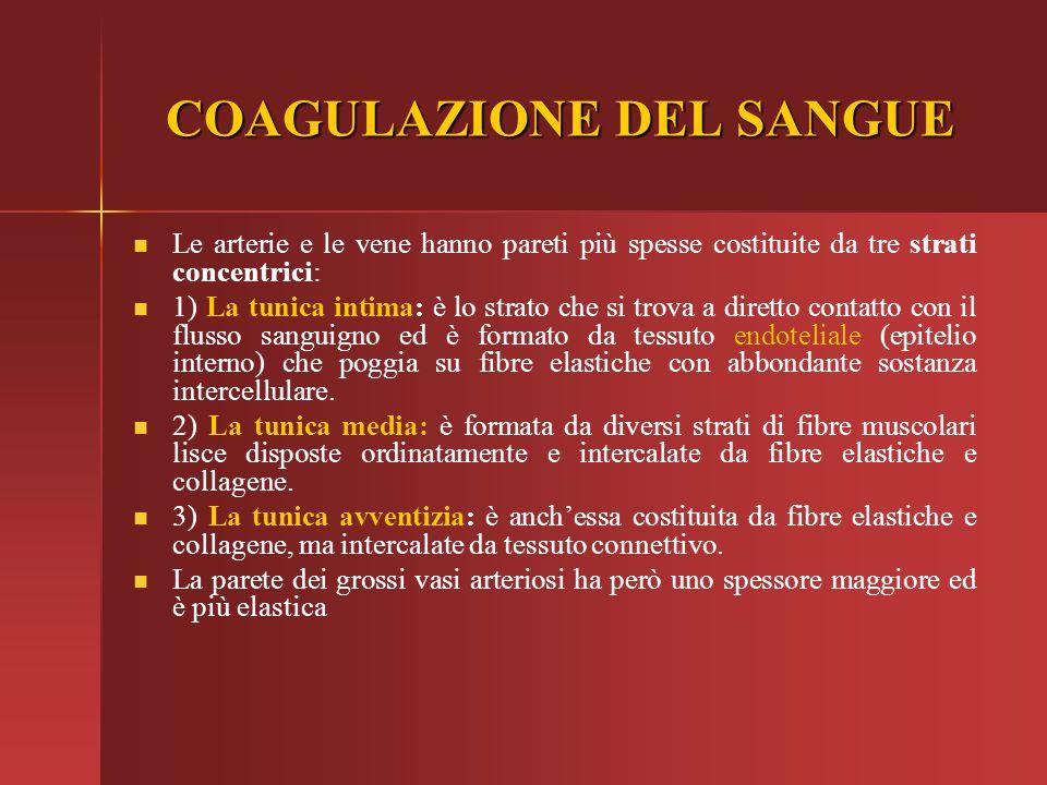COAGULAZIONE DEL SANGUE COAGULAZIONE DEL SANGUE Le arterie e le vene hanno pareti più spesse costituite da tre strati concentrici: 1) La tunica intima