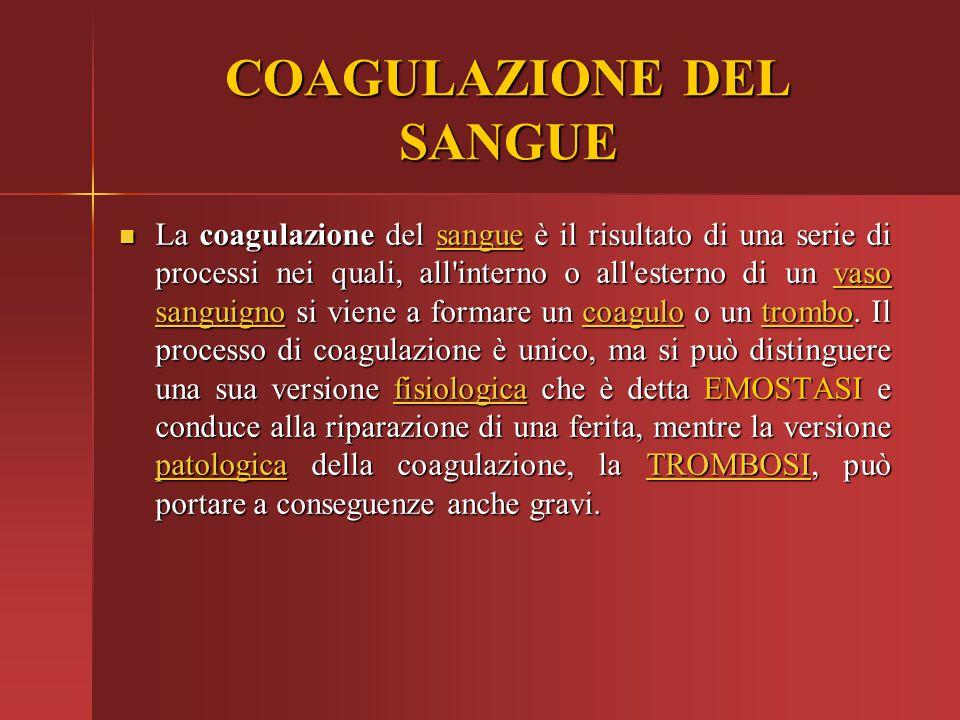 COAGULAZIONE DEL SANGUE La coagulazione del sangue è il risultato di una serie di processi nei quali, all'interno o all'esterno di un vaso sanguigno s