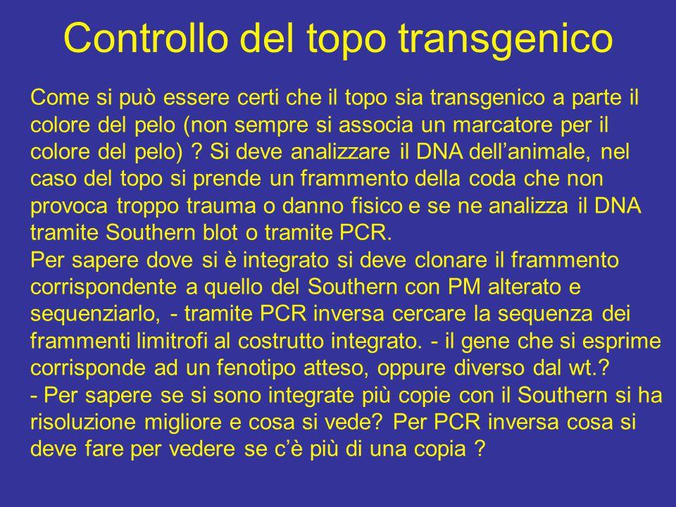 Controllo del topo transgenico Come si può essere certi che il topo sia transgenico a parte il colore del pelo (non sempre si associa un marcatore per