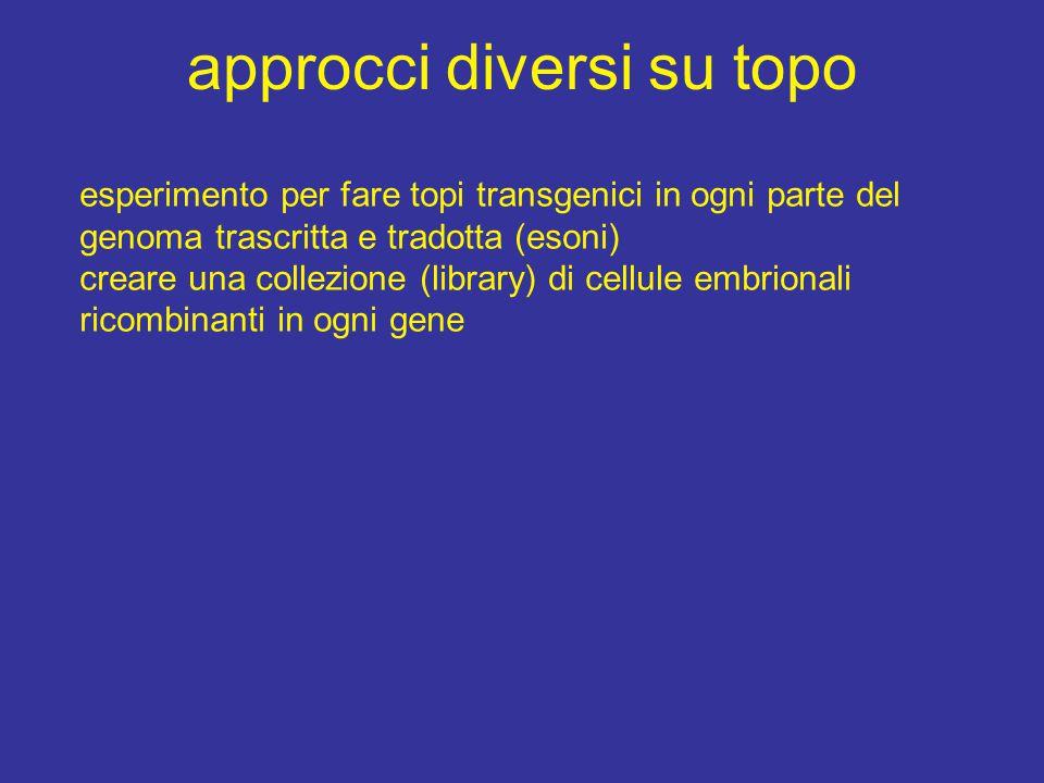approcci diversi su topo esperimento per fare topi transgenici in ogni parte del genoma trascritta e tradotta (esoni) creare una collezione (library)