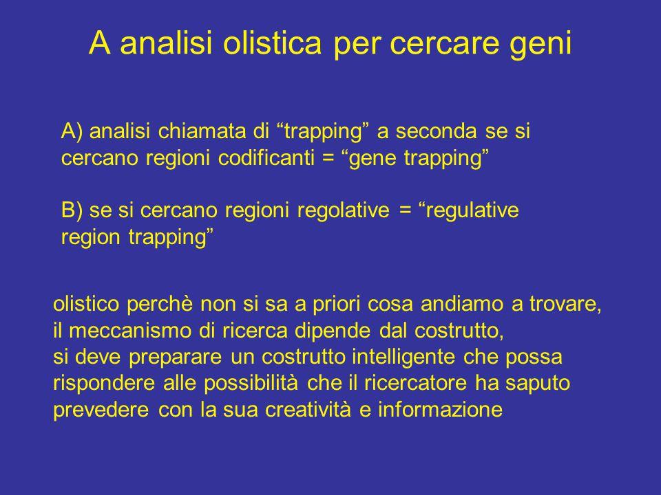 """A analisi olistica per cercare geni A) analisi chiamata di """"trapping"""" a seconda se si cercano regioni codificanti = """"gene trapping"""" B) se si cercano r"""