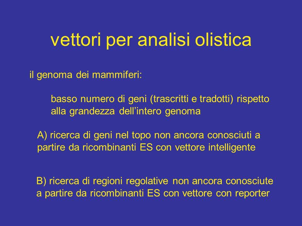 vettori per analisi olistica il genoma dei mammiferi: basso numero di geni (trascritti e tradotti) rispetto alla grandezza dell'intero genoma A) ricer