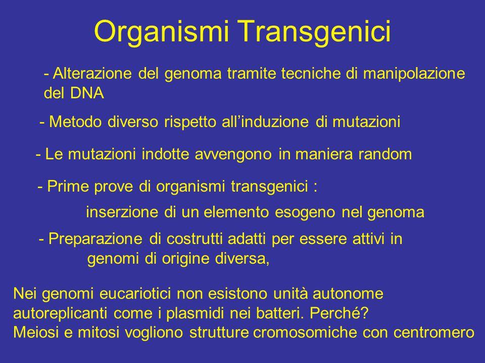 Organismi Transgenici - Alterazione del genoma tramite tecniche di manipolazione del DNA - Metodo diverso rispetto all'induzione di mutazioni - Le mut
