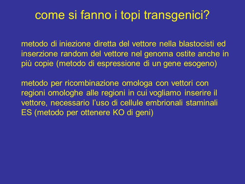 come si fanno i topi transgenici? metodo di iniezione diretta del vettore nella blastocisti ed inserzione random del vettore nel genoma ostite anche i