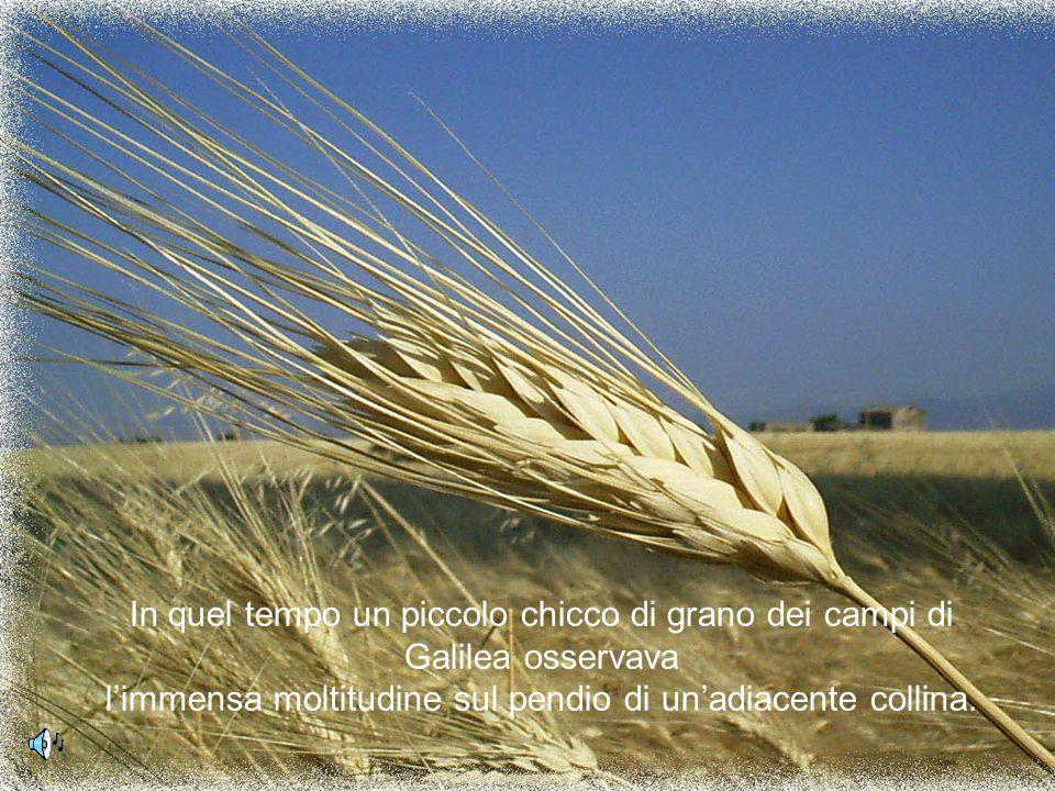 In quel tempo un piccolo chicco di grano dei campi di Galilea osservava l'immensa moltitudine sul pendio di un'adiacente collina.