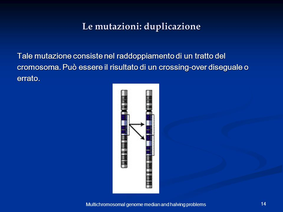 14 Multichromosomal genome median and halving problems Le mutazioni: duplicazione Tale mutazione consiste nel raddoppiamento di un tratto del cromosoma.