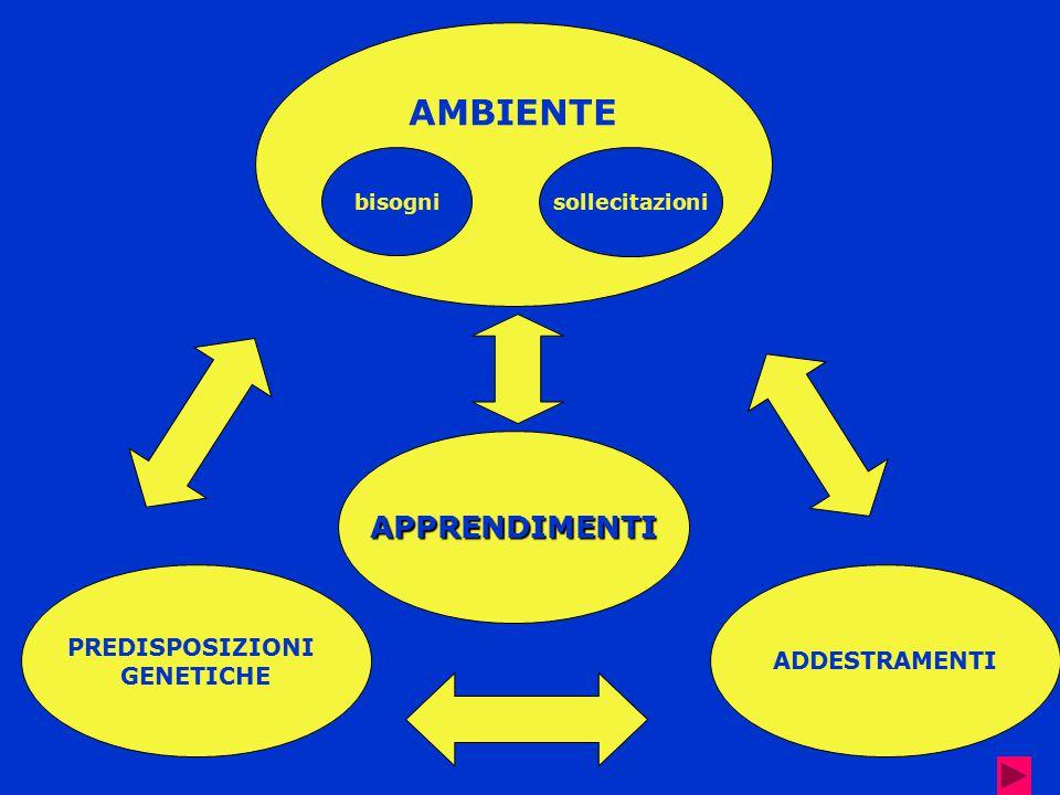 AMBIENTE ADDESTRAMENTI PREDISPOSIZIONI GENETICHE APPRENDIMENTI sollecitazioni bisogni