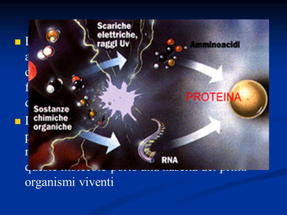 L atmosfera di questo periodo era poco adatta alla vita come la conosciamo noi ma aveva una composizione ideale per consentire la formazione dei composti organici precursori della vita L evoluzione di queste molecole negli oceani primordiali portò prima alla formazione di molecole autoreplicanti e infine la selezione di queste molecole portò alla nascita dei primi organismi viventi