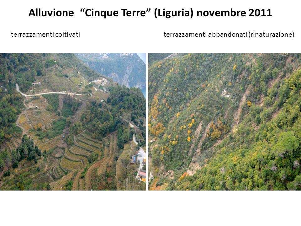 """Alluvione """"Cinque Terre"""" (Liguria) novembre 2011 terrazzamenti coltivati terrazzamenti abbandonati (rinaturazione)"""