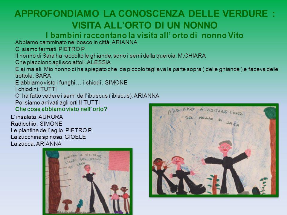 APPROFONDIAMO LA CONOSCENZA DELLE VERDURE : VISITA ALL'ORTO DI UN NONNO I bambini raccontano la visita all' orto di nonno Vito Abbiamo camminato nel b