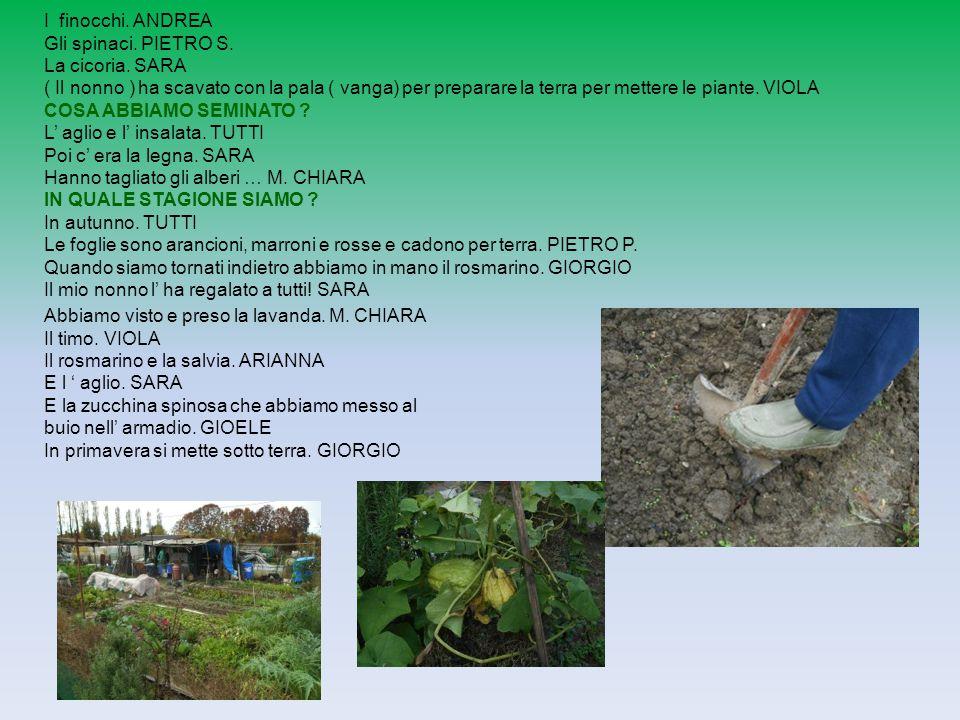 I finocchi. ANDREA Gli spinaci. PIETRO S. La cicoria. SARA ( Il nonno ) ha scavato con la pala ( vanga) per preparare la terra per mettere le piante.