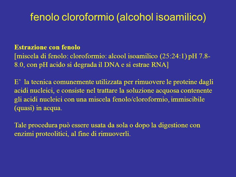 fenolo cloroformio (alcohol isoamilico) Estrazione con fenolo [miscela di fenolo: cloroformio: alcool isoamilico (25:24:1) pH 7.8- 8.0, con pH acido s