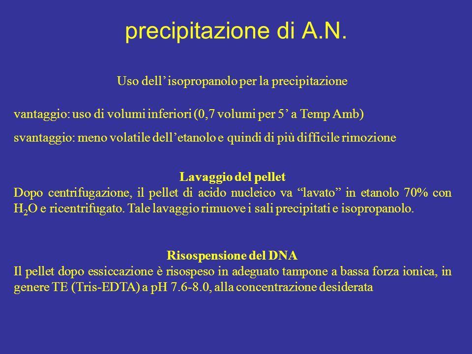 precipitazione di A.N. Uso dell' isopropanolo per la precipitazione vantaggio: uso di volumi inferiori (0,7 volumi per 5' a Temp Amb) svantaggio: meno