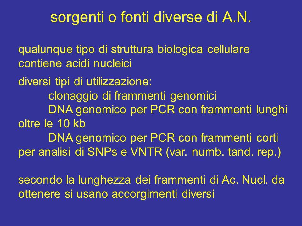 sorgenti o fonti diverse di A.N. qualunque tipo di struttura biologica cellulare contiene acidi nucleici diversi tipi di utilizzazione: clonaggio di f