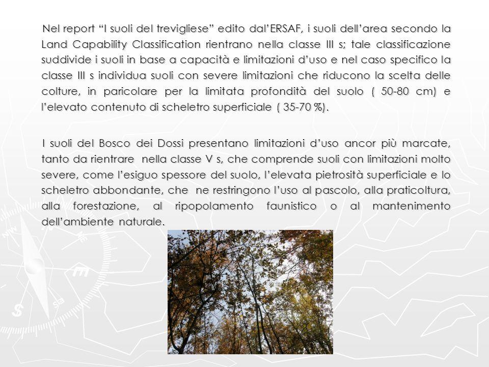 """Nel report """"I suoli del trevigliese"""" edito dal'ERSAF, i suoli dell'area secondo la Land Capability Classification rientrano nella classe III s; tale c"""