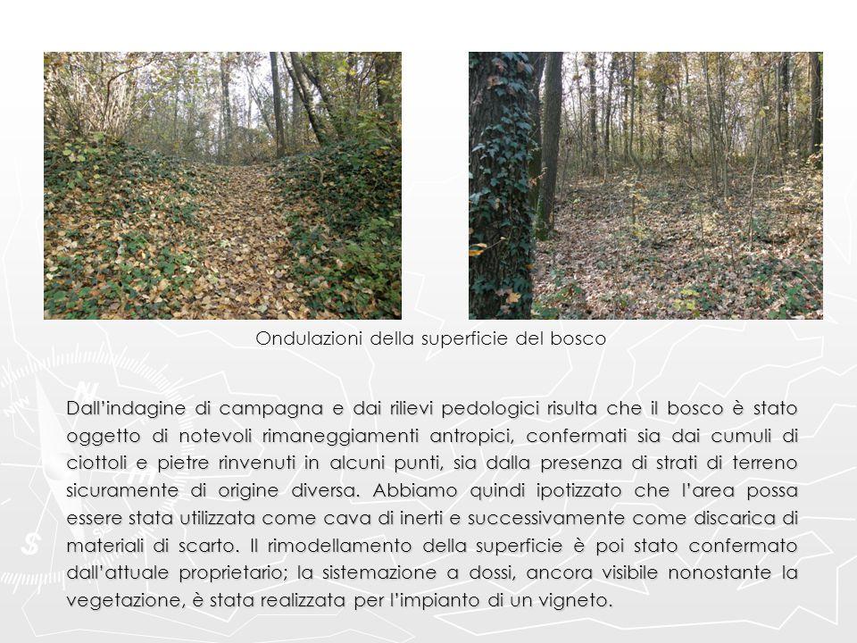 Ondulazioni della superficie del bosco Dall'indagine di campagna e dai rilievi pedologici risulta che il bosco è stato oggetto di notevoli rimaneggiam