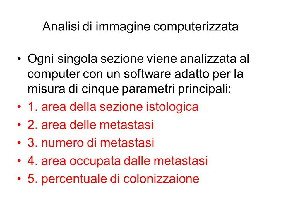 Analisi di immagine computerizzata Ogni singola sezione viene analizzata al computer con un software adatto per la misura di cinque parametri principa