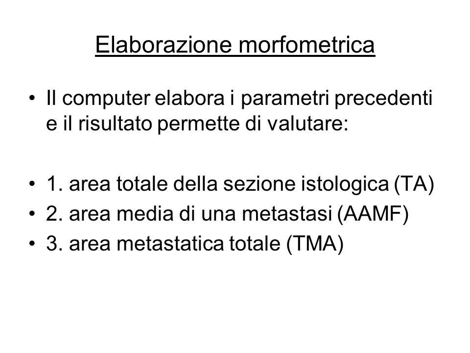 Elaborazione morfometrica Il computer elabora i parametri precedenti e il risultato permette di valutare: 1. area totale della sezione istologica (TA)