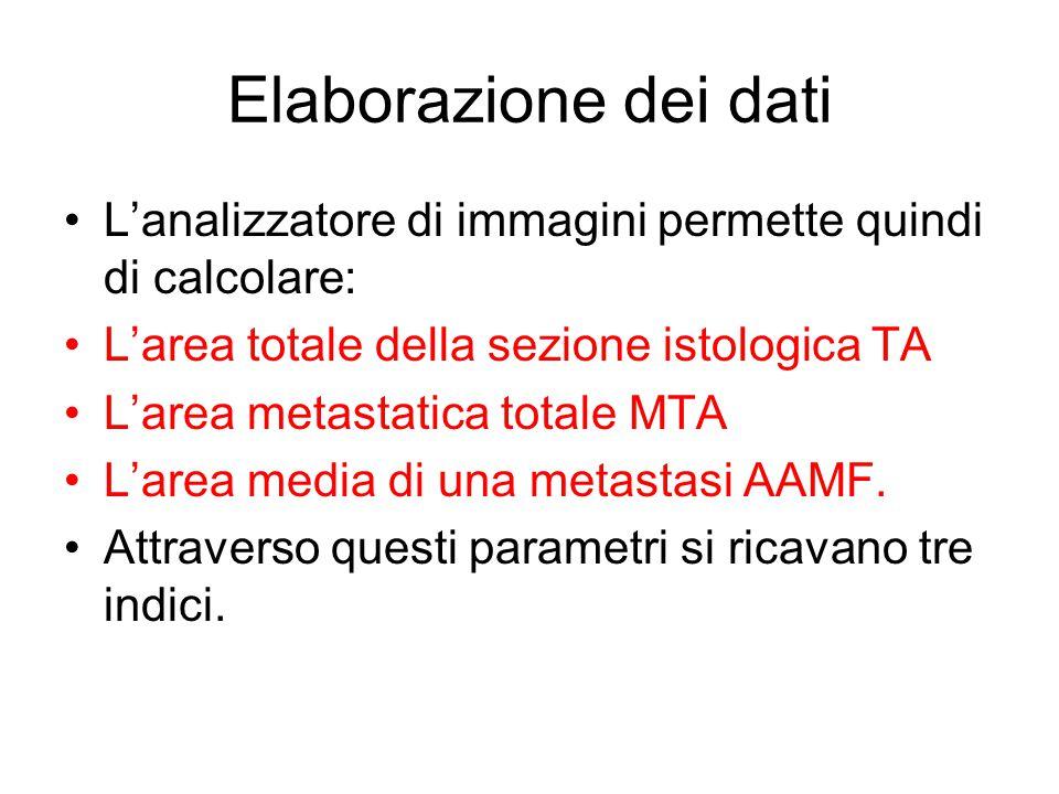 Elaborazione dei dati L'analizzatore di immagini permette quindi di calcolare: L'area totale della sezione istologica TA L'area metastatica totale MTA