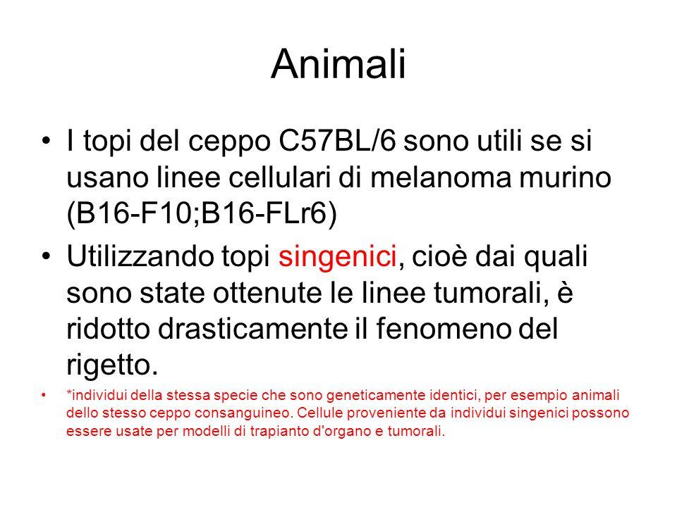 Animali I topi del ceppo C57BL/6 sono utili se si usano linee cellulari di melanoma murino (B16-F10;B16-FLr6) Utilizzando topi singenici, cioè dai qua