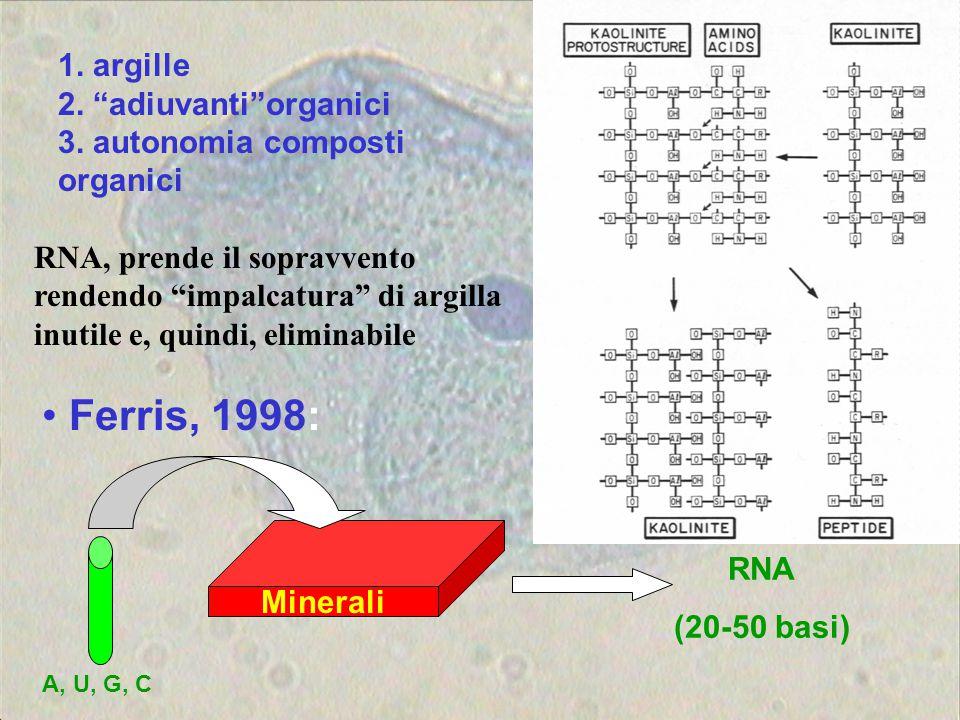"1. argille 2. ""adiuvanti""organici 3. autonomia composti organici Minerali A, U, G, C RNA (20-50 basi) Ferris, 1998: RNA, prende il sopravvento rendend"