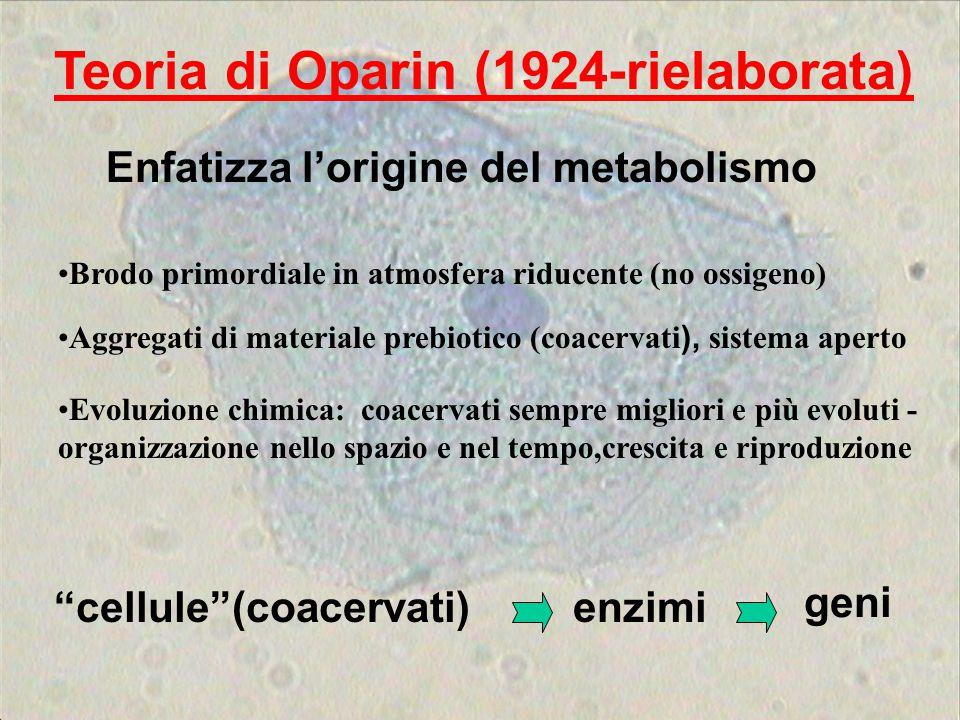 Brodo primordiale in atmosfera riducente (no ossigeno) Teoria di Oparin (1924-rielaborata) Aggregati di materiale prebiotico (coacervati ), sistema ap