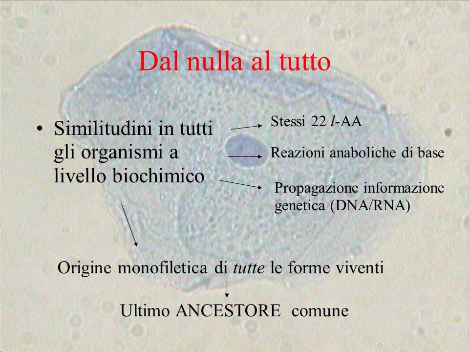 Dal nulla al tutto Similitudini in tutti gli organismi a livello biochimico Stessi 22 l-AA Reazioni anaboliche di base Propagazione informazione genet