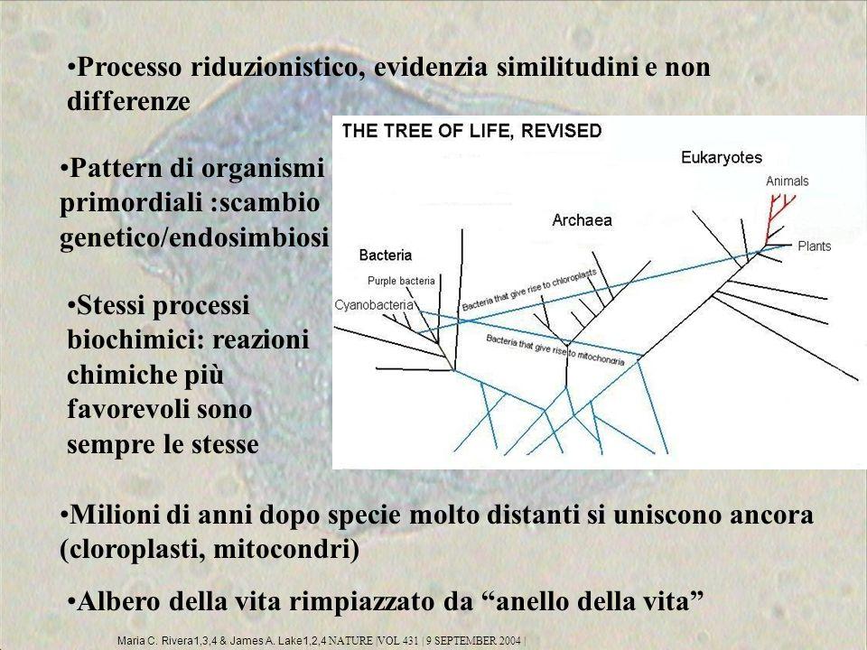 Processo riduzionistico, evidenzia similitudini e non differenze Pattern di organismi primordiali :scambio genetico/endosimbiosi Milioni di anni dopo