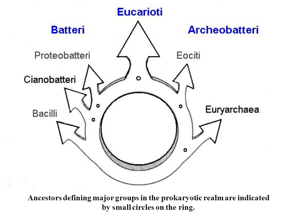 Ancestors defining major groups in the prokaryotic realm are indicated by small circles on the ring.