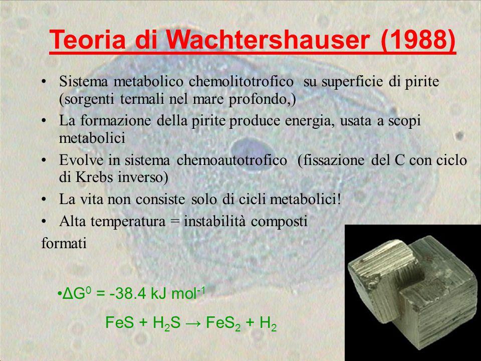 Sistema metabolico chemolitotrofico su superficie di pirite (sorgenti termali nel mare profondo,) La formazione della pirite produce energia, usata a