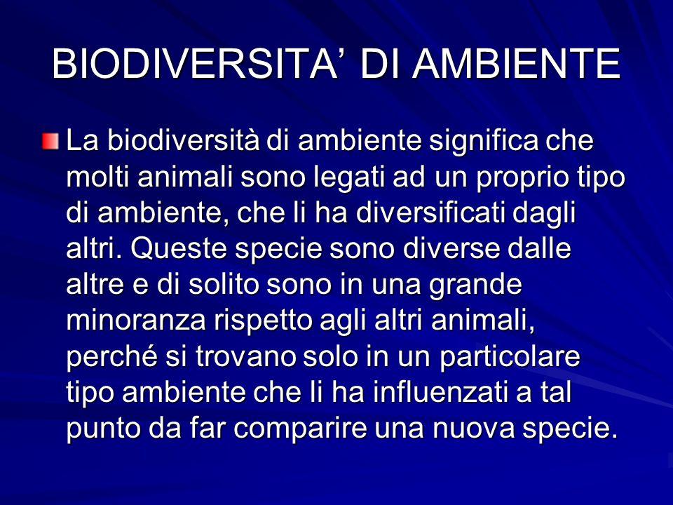 BIODIVERSITA' DI AMBIENTE La biodiversità di ambiente significa che molti animali sono legati ad un proprio tipo di ambiente, che li ha diversificati