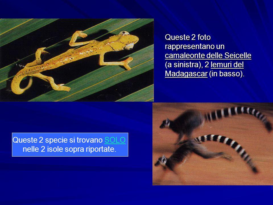 Queste 2 foto rappresentano un camaleonte delle Seicelle (a sinistra), 2 lemuri del Madagascar (in basso). Queste 2 specie si trovano SOLO nelle 2 iso