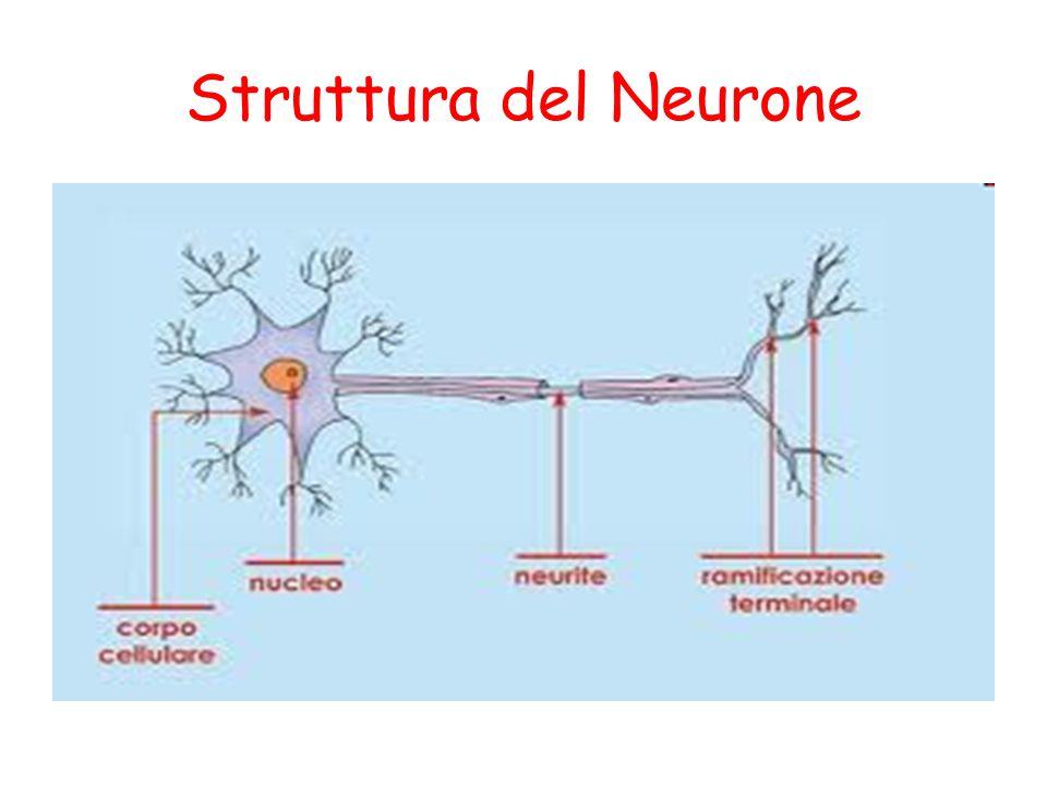 Struttura del Neurone