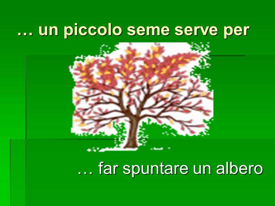 … un piccolo seme serve per … far spuntare un albero