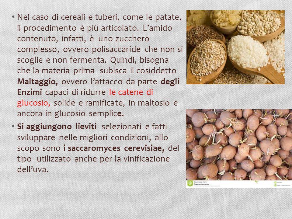 Nel caso di cereali e tuberi, come le patate, il procedimento è più articolato. L'amido contenuto, infatti, è uno zucchero complesso, ovvero polisacca
