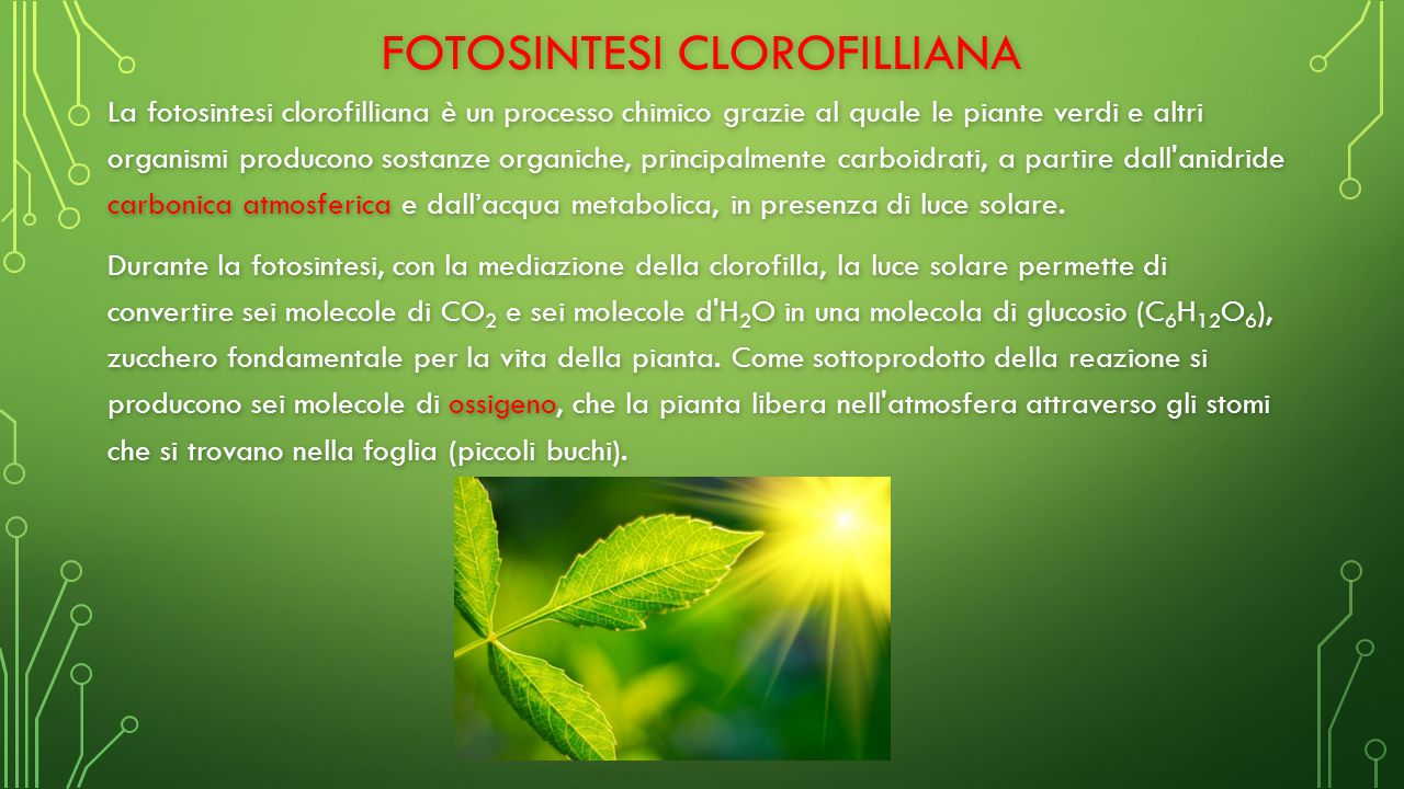 FOTOSINTESI CLOROFILLIANA La fotosintesi clorofilliana è un processo chimico grazie al quale le piante verdi e altri organismi producono sostanze organiche, principalmente carboidrati, a partire dall anidride carbonica atmosferica e dall'acqua metabolica, in presenza di luce solare.
